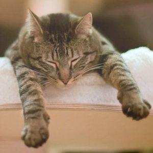 gato en camilla