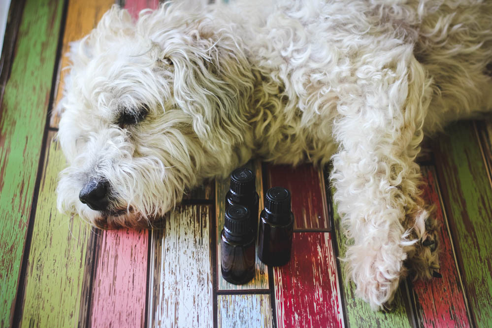 Dogs Eating Oregano