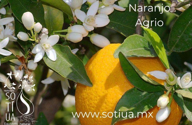Té de Naranjo Agrio